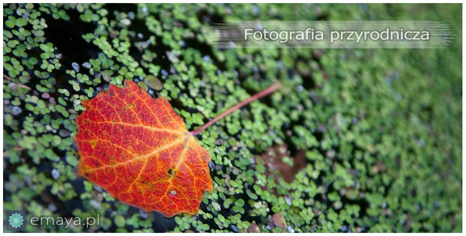 fotografia-przyrody