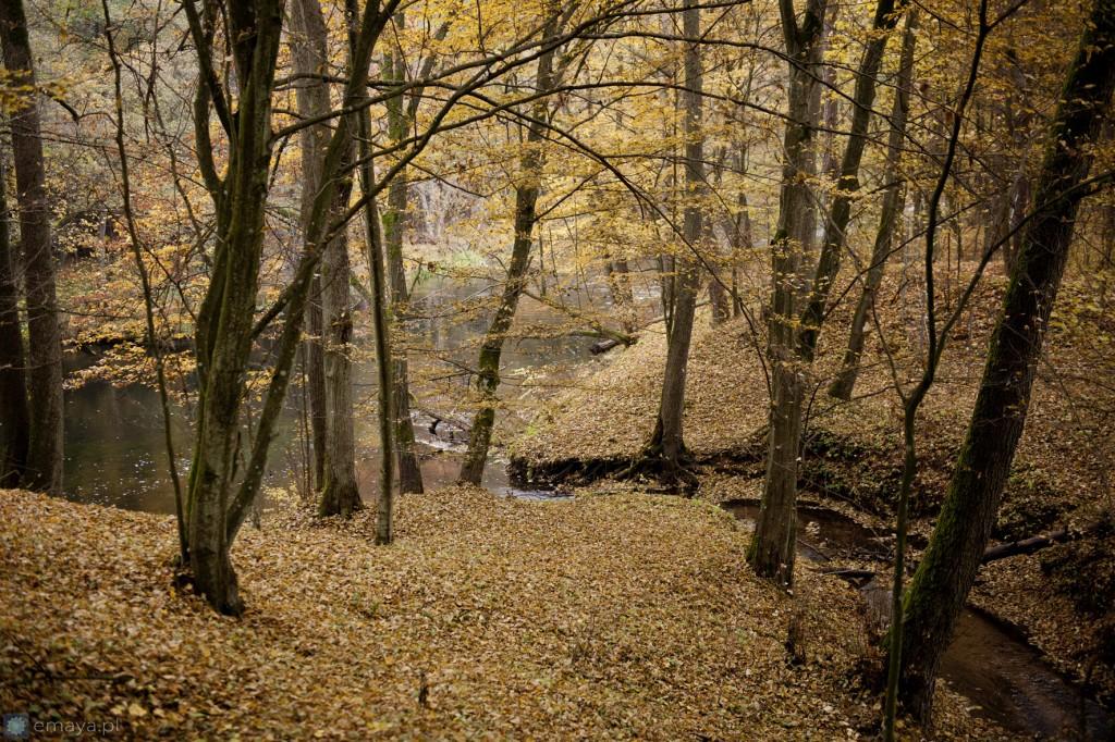 jesien w borach