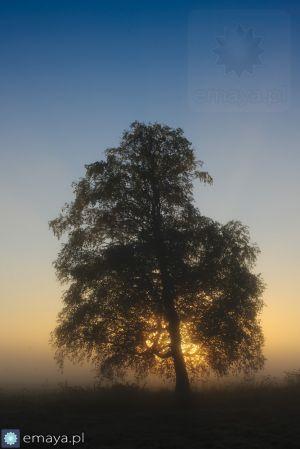 c41-drzewo_o_wschodzie.JPG