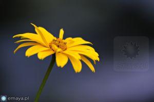 kwiat2.jpg