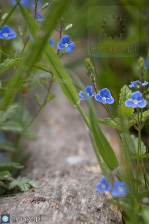 kwiatki.jpg