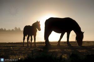 konie_pod_slonce.JPG