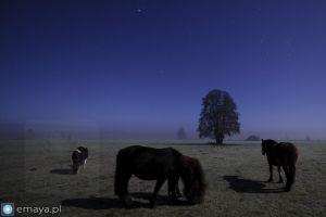 konie_noc_pełnia.JPG