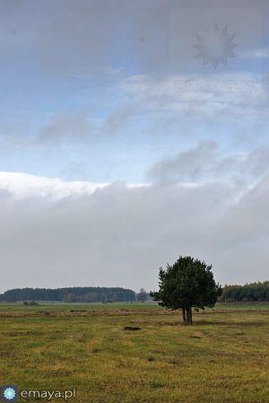 drzewa_w_polu.JPG