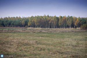 las_przy_lace.jpg